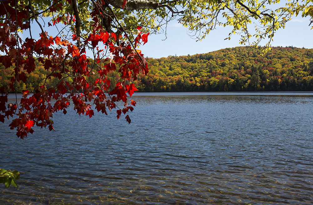 Red maple and fall foliage along shore of Russell Pond.